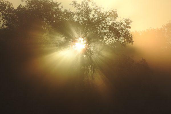 Doorbrekend zonlicht boom - Jeroen Peters